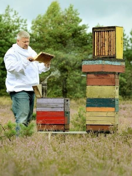 pszczelarz Konrad Fujarski