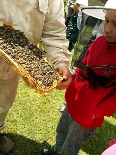 pszczelarz pokazujący chłopcu ule