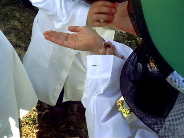 dziecko z pszczołą na dłoni